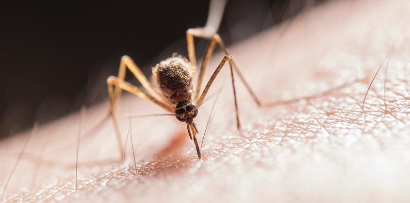 Was hilft gegen Mücken? Hilfreiche Tipps & Tricks - gutefrage